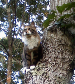 Soukie in a tree