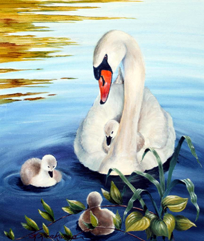 Shawme Pond Swans, by Kathryn Kleekamp